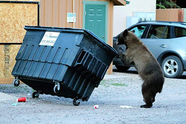 A black bear tips a trash bin over Wednesday near the intersection of Waters Avenue and South West End Street in Aspen.