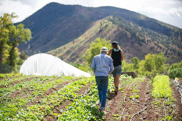 Erin Cuseo, front, checks out the crop at her farm on Lazy Glen Open Space.