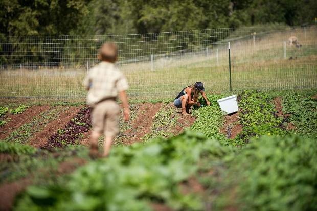 Erin Cuseo harvests greens on the Lazy Glen Open Space as her son Archer, 4, walks out to greet her.