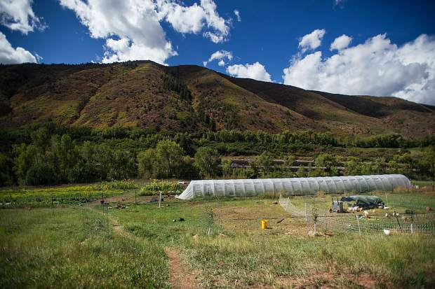 Pitkin County Open Space and Trails acquired the Lazy Glen Open Space property in 2015 and leased 10 acres for agricultural uses.