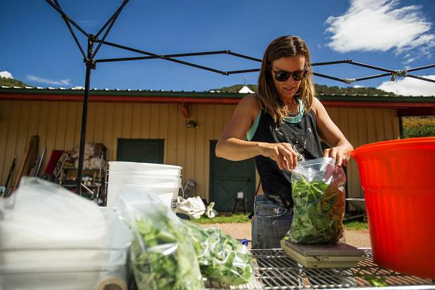 Erin Cuseo bags greens reaped in the fall harvest at land she works at Lazy Glen Open Space.