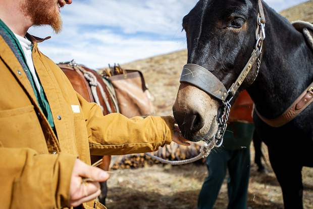 A Buena Vista Correctional Facility inmate smiles when he feeds Karla the mule on the pack line on top of Mountain Boy Basin on Independence Pass on Sept. 19. The inmates were brought in to remove rebar from a snowfence installed in the early 1960s for an Independence Pass Foundation project.