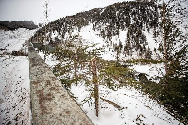 Hundreds if not thousands of trees were bowed or broken by the avalanche from the K-Chutes and Five Fingers. They range from gangly aspens to mature conifers.