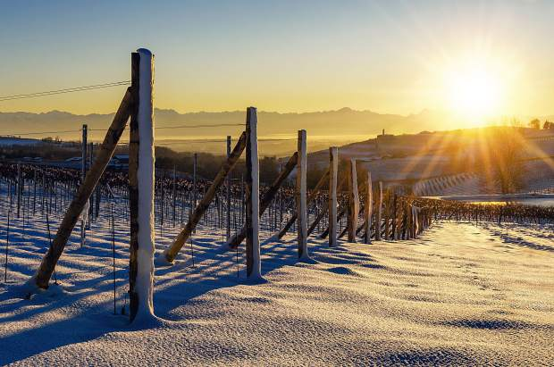 While it is not an every-year event, some higher elevation vineyards are subject to snowfall. Here, vineyards in the Barolo wine region of Northern Italy lay covered in a picturesque snowfall.