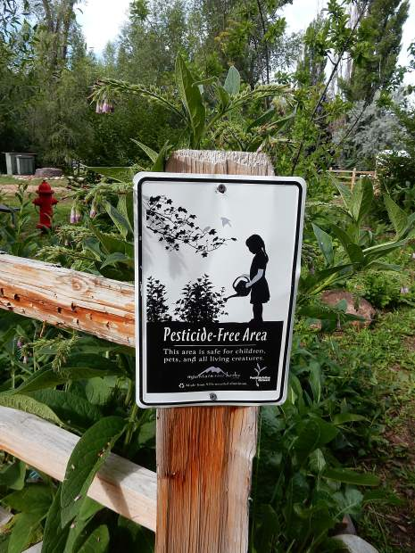 No pesticides or herbicides are used in Basalt's edible garden.