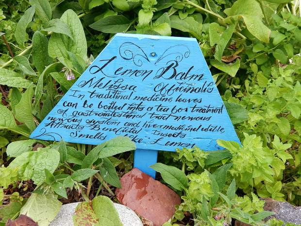 Signs or placards are placed along many of the plants to provide and name and uses.