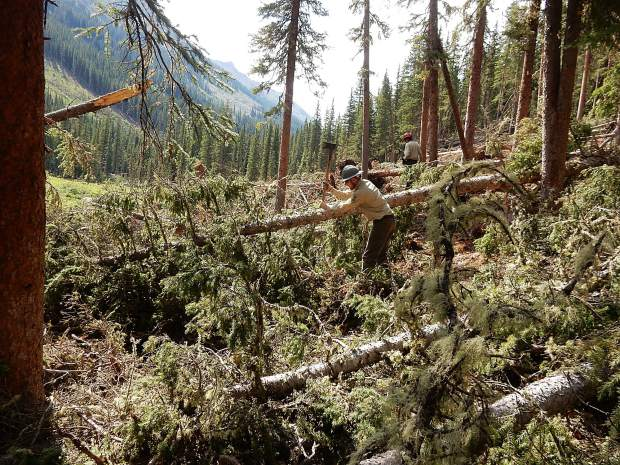 A ranger cuts through some of the downfall Friday on the South Fork Trail. Nearly every valley in the Aspen-Sopris Ranger District was hit with five to eight avalanches in March.