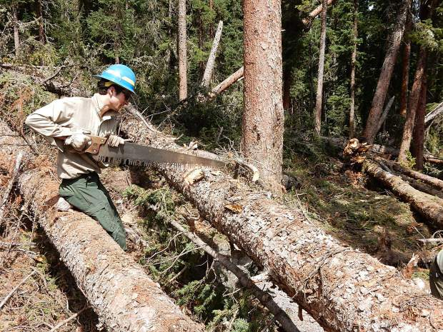 Jerry Olp, a wilderness ranger with the Aspen-Sopris Ranger District, uses a single-person crosscut saw to cut through trees knocked down on the South Fork Trail by an avalanche last winter.
