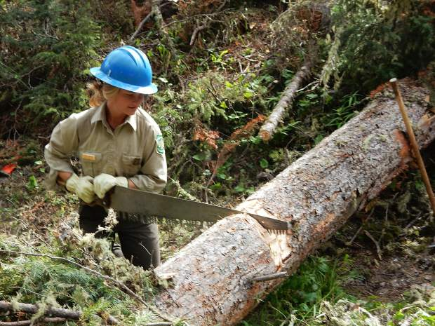 Anna Kistner, a wilderness ranger, saws a tree trunk covering the South Fork Trail on Friday.