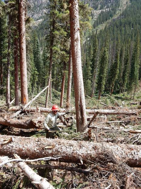 Lead wilderness ranger Tyler Lee surveys the immense job facing crews on the South Fork Trail on Friday. Lee's records show the wilderness crew has cleared more than 3,400 trees from trails this summer.