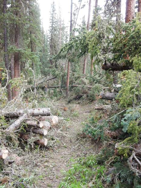The trail and wilderness crews blazed a path through dense downfall on the South Fork Trail on Friday. The crews have cleared thousands of trees from trails surrounding Aspen this summer.